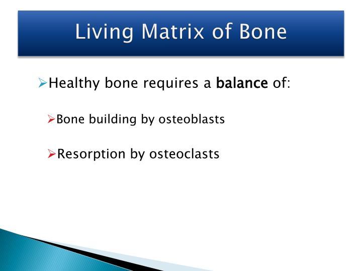 Living Matrix of Bone
