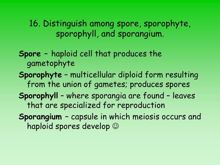 16. Distinguish among spore, sporophyte, sporophyll, and sporangium.