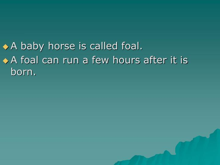 A baby horse is called foal.