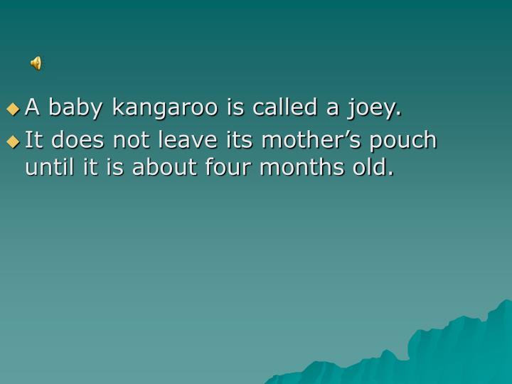 A baby kangaroo is called a joey.
