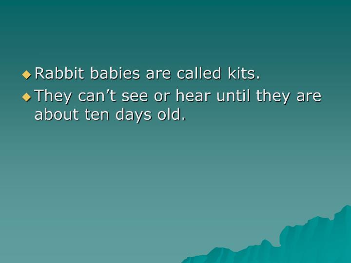 Rabbit babies are called kits.