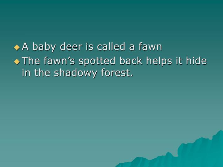 A baby deer is called a fawn