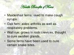 health benefits of ferns