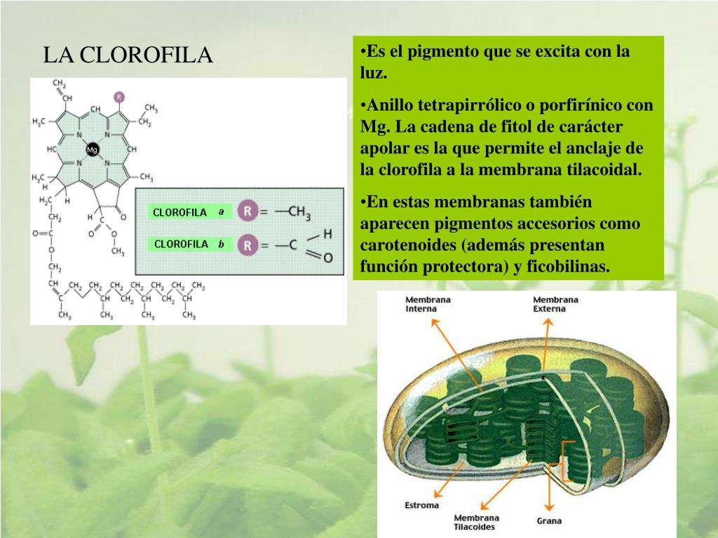 dieta metabolismo acelerado haylie pomroy medicina natural