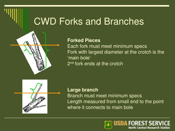 CWD Forks and Branches