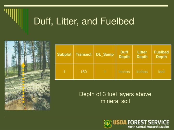 Duff, Litter, and Fuelbed