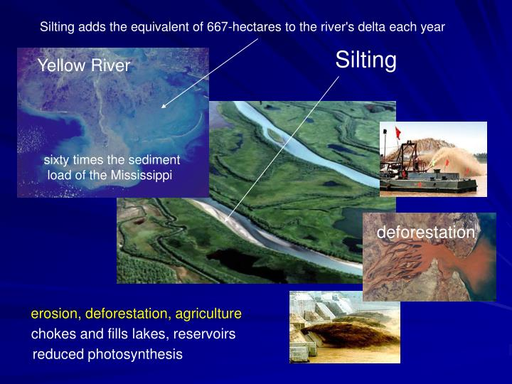 Silting adds the equivalent of 667-hectares to the river's delta each year