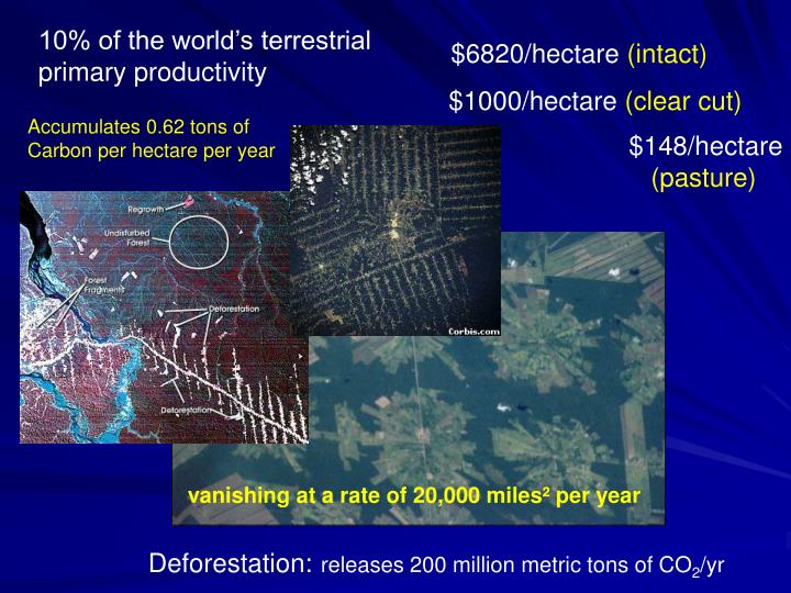 10% of the world's terrestrial