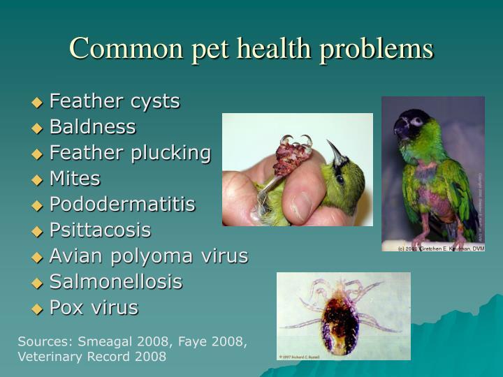 Common pet health problems