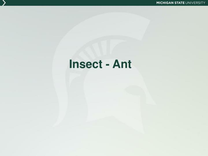 Insect - Ant