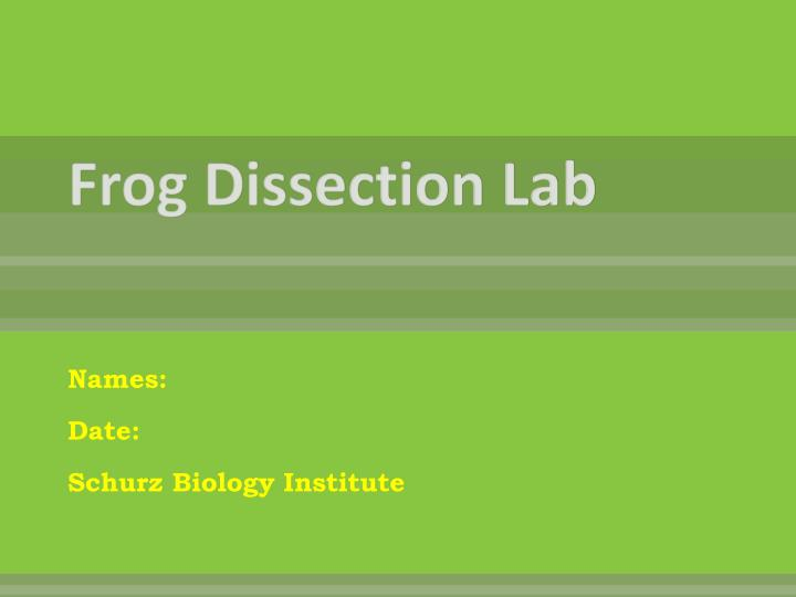 frog dissection lab n.