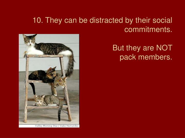 10. They can be distracted by their social commitments.