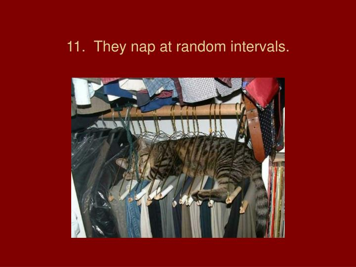 11.  They nap at random intervals.
