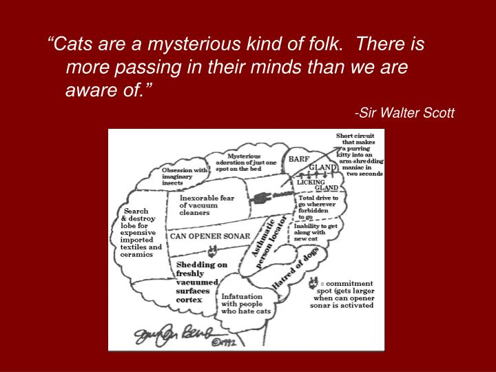 """Cats are a mysterious kind of folk.  There is more passing in their minds than we are aware of."""