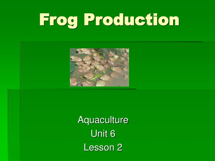 frog production n.