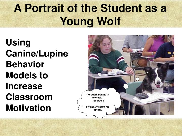 a portrait of the student as a young wolf n.