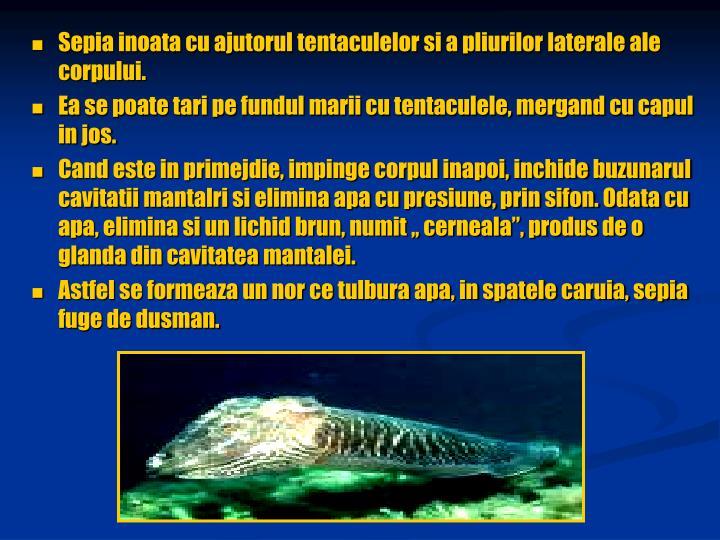 Sepia inoata cu ajutorul tentaculelor si a pliurilor laterale ale corpului.