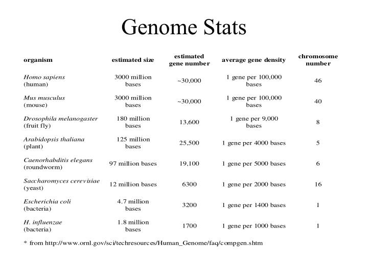Genome stats