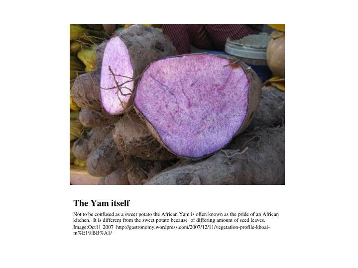 The Yam itself