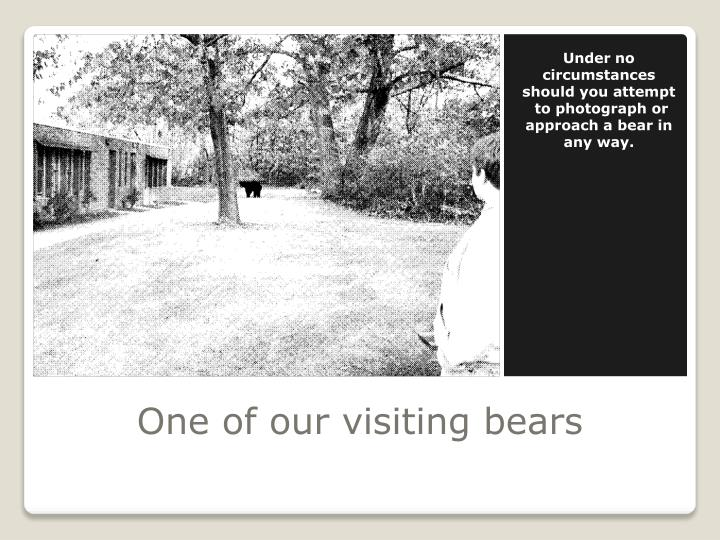 One of our visiting bears