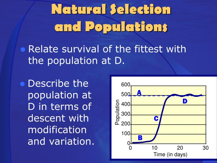 Relate survival of the fittest with the population at D.
