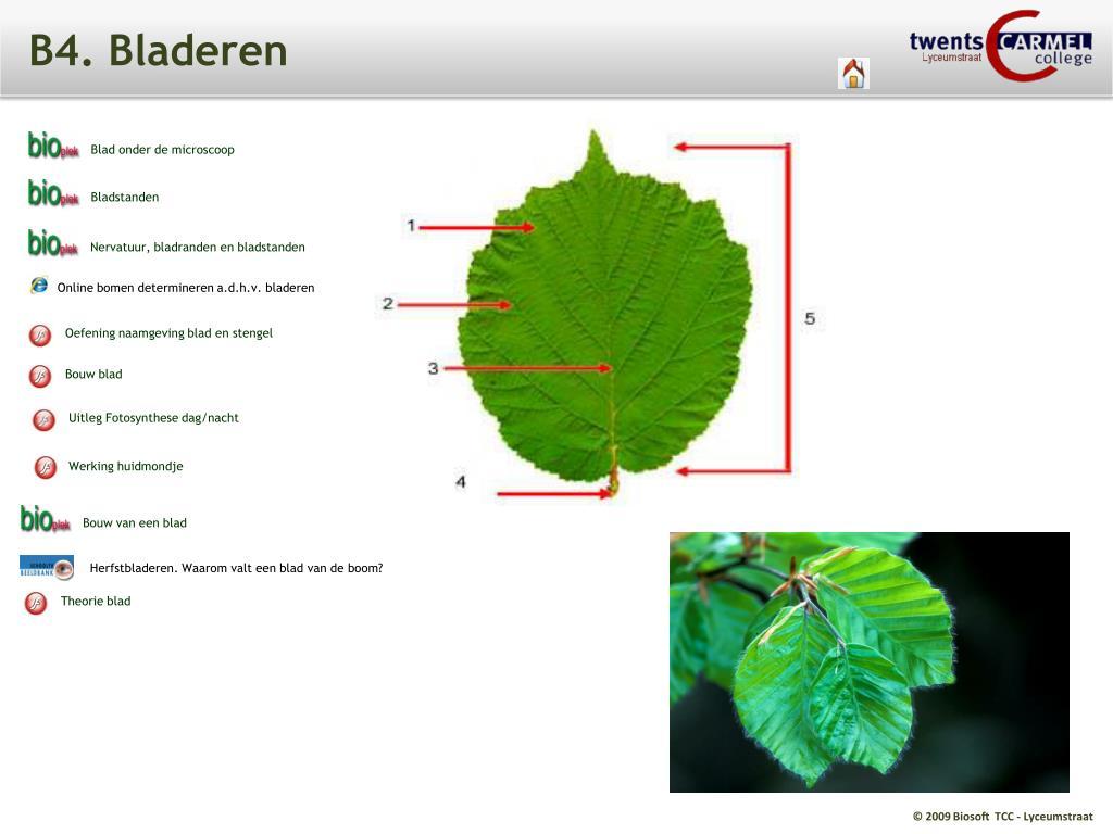 Verwonderlijk PPT - T2. Planten PowerPoint Presentation, free download - ID:4133062 DH-52