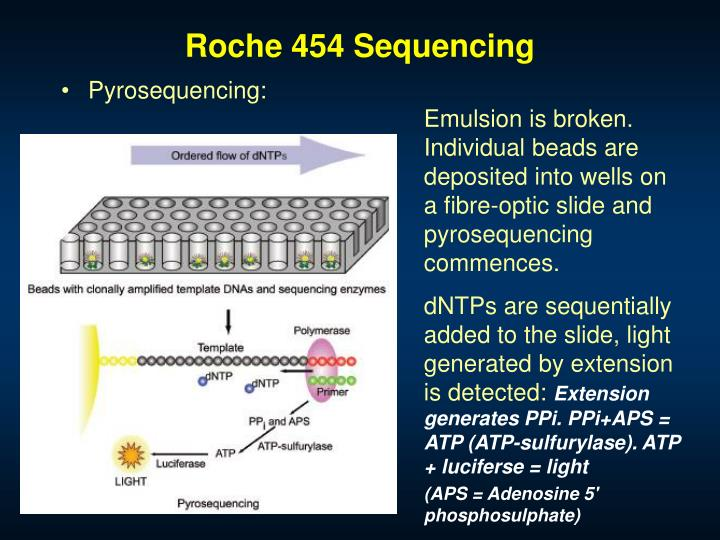 Roche 454 Sequencing