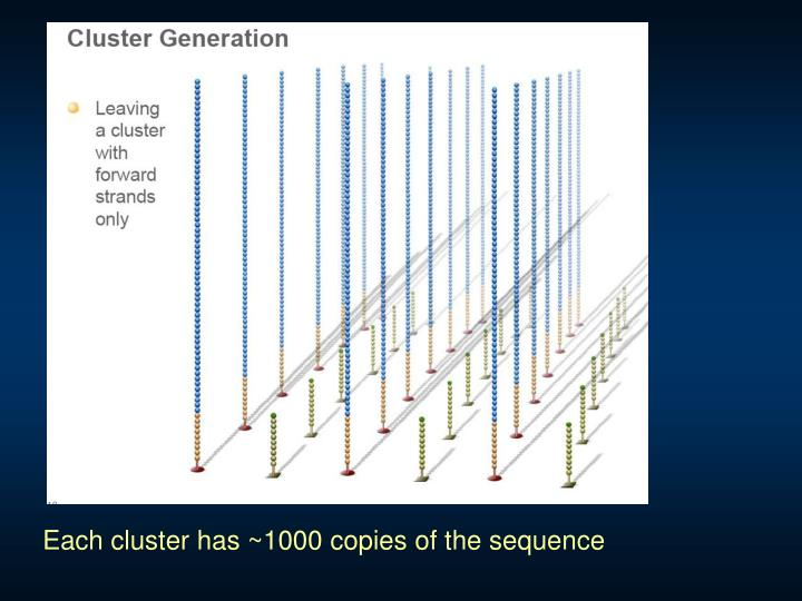 Each cluster has ~1000 copies of the sequence