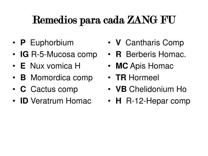 Remedios para cada ZANG FU