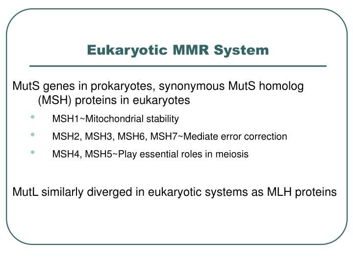 Eukaryotic MMR System