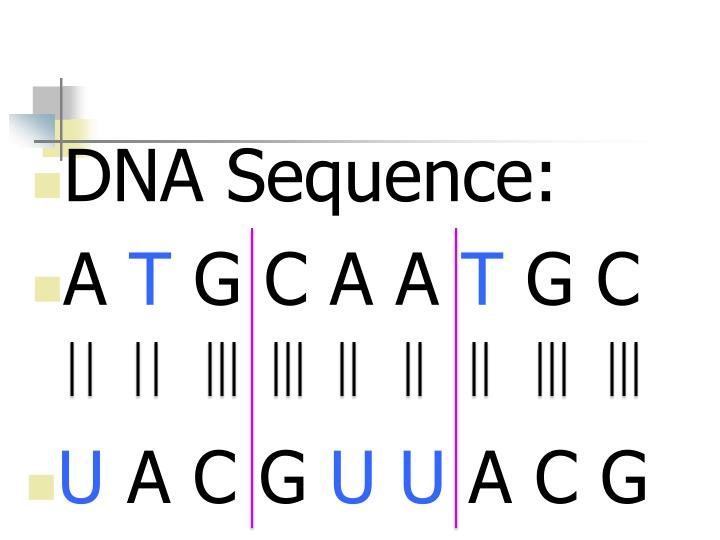 DNA Sequence: