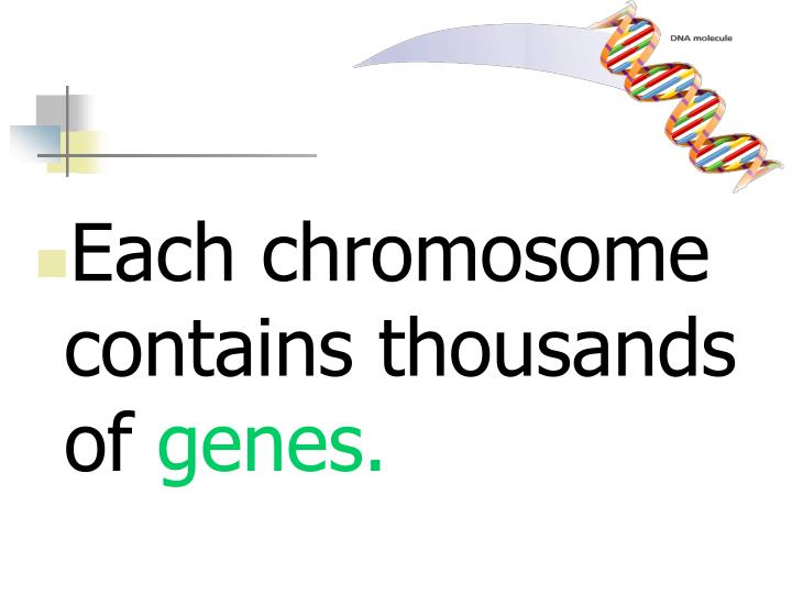 Each chromosome contains thousands of