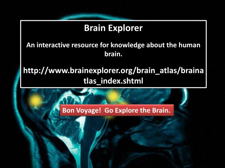 Brain Explorer
