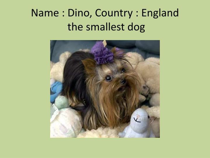 Name : Dino, Country : England