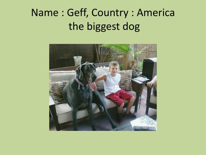 Name geff country america the biggest dog