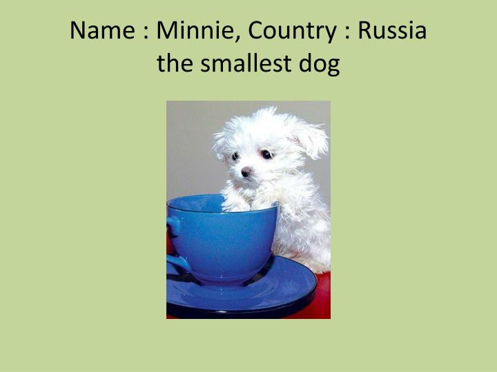 Name : Minnie, Country : Russia