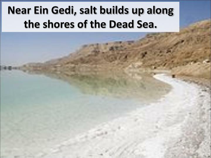 Near Ein Gedi, salt builds up along the shores of the Dead Sea.