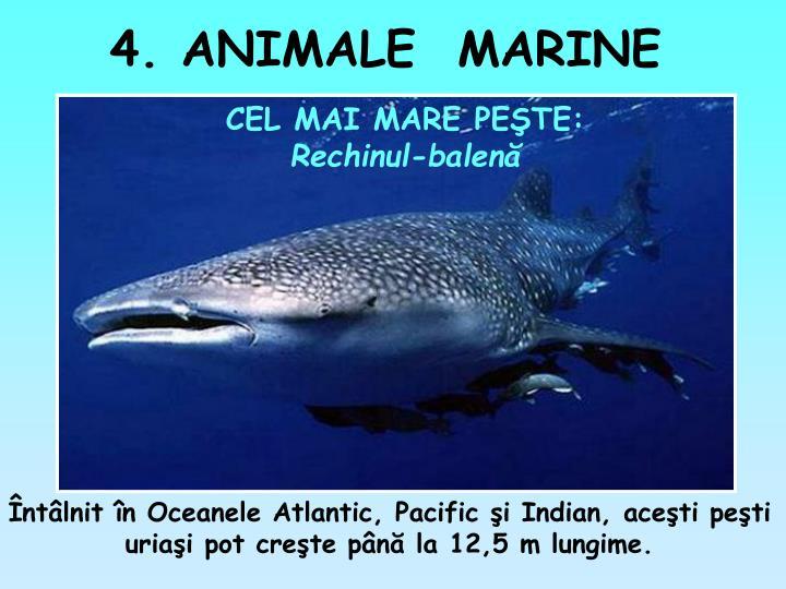 4. ANIMALE  MARINE