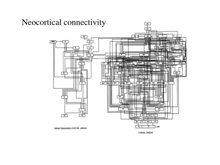 Neocortical connectivity