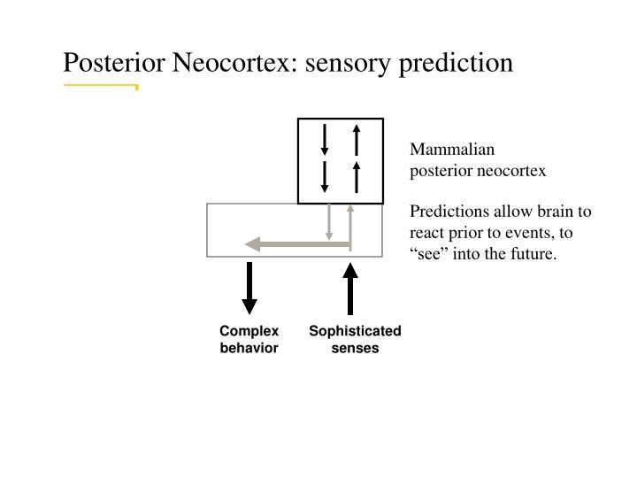 Posterior Neocortex: sensory prediction