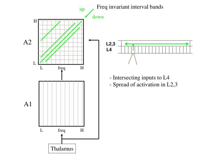 Freq invariant interval bands
