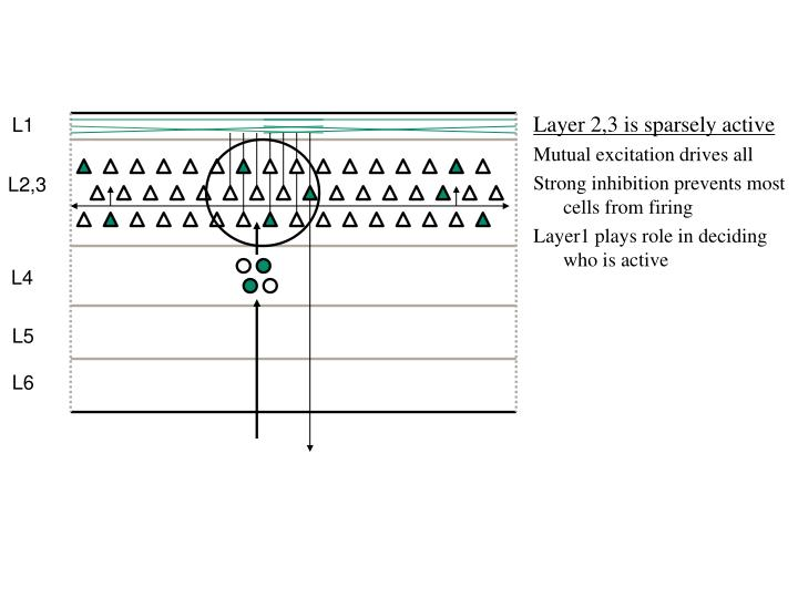 Layer 2,3 is sparsely active