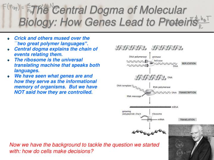 the central dogma of molecular biology how genes lead to proteins n.