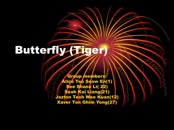 butterfly tiger n.