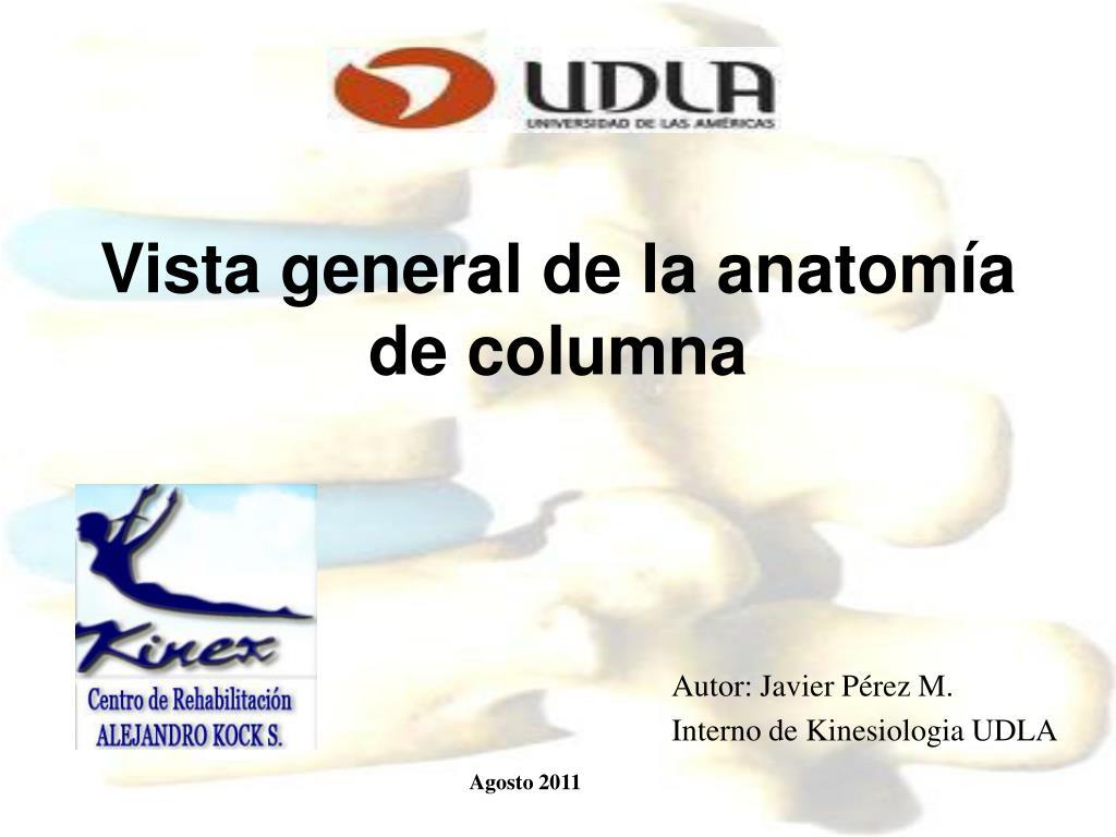 PPT - Vista general de la anatomía de columna PowerPoint ...