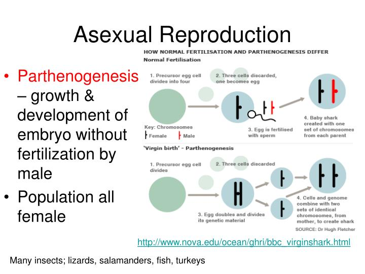 Parthenogenesis and asexual reproduction definition