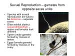 sexual reproduction gametes from opposite sexes unite