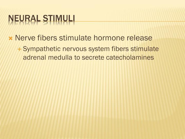 Nerve fibers stimulate hormone release