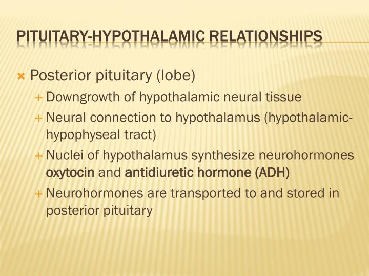 Posterior pituitary (lobe)