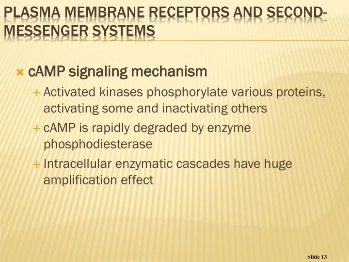 cAMP signaling mechanism